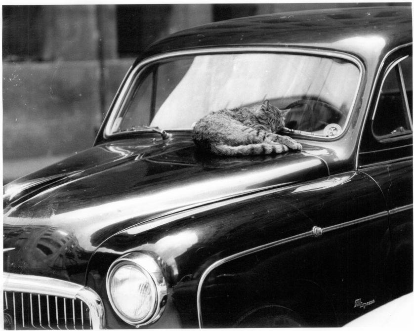 El gat dormilec
